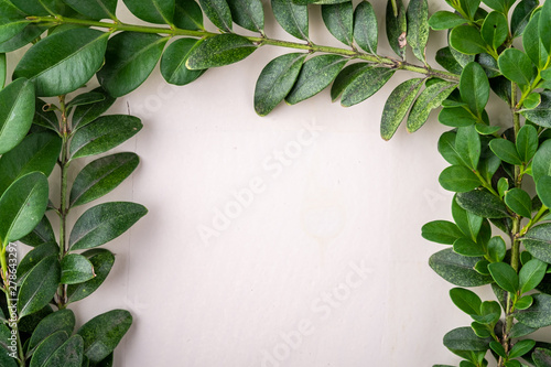 Wall Murals Floral Wreath square frame of Buxus sempervirens green leaf leaves branches white wooden background copy space template top view overhead