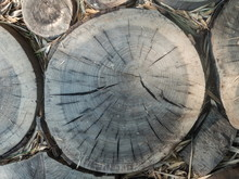 A Beautiful Saw Cut Down Of A Tree In A Park On Ground By Day