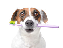 Cute Dog With Toothbrush On White Background