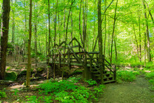 Wooden Bridge In Middle Of Forest