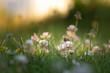 field of flowers, busy working bee