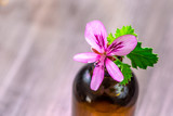 Fototapeta Bambus - geranium essential oil extract, infusion, remedy, tincture container on wooden background