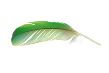 Beautiful Parrot Lovebird Feather Isolated On White Background