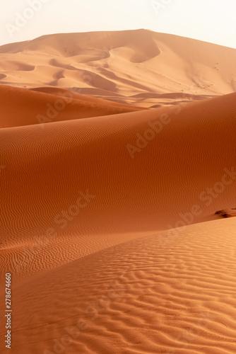 Obraz Beautiful sand dunes in the Sahara desert. - fototapety do salonu