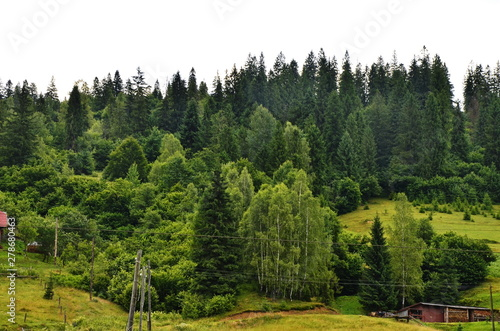 Acrylic Prints Forest Mountain landscapes in the summer.