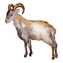 Ram Farm Animal Isolated. Watercolor Background Illustration Set. Isolated Ram Illustration Element.