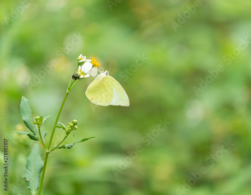 Closeup butterfly on flower (Common tiger butterfly)... Wallpaper Mural