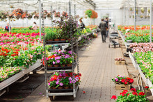 Rows Of Various Flowers In Pot...