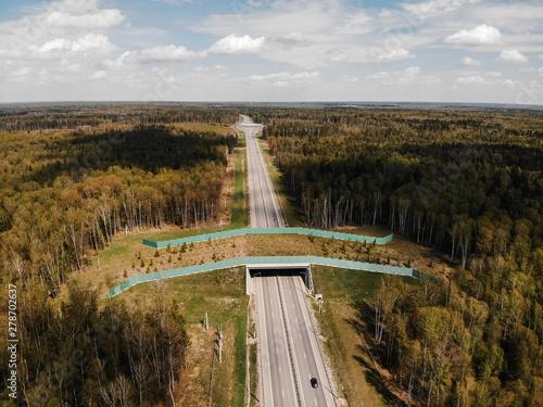 Foto auf AluDibond Rosa dunkel Wildlife Crossing - Bridge over a highway in forest