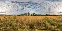 Full Seamless Spherical Hdri Panorama 360 Degrees Angle View Among Rye And Wheat Fields In Summer Day With Beautiful Cirrocumilus Clouds In Equirectangular Projection