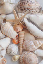 Seashell Background With Starf...