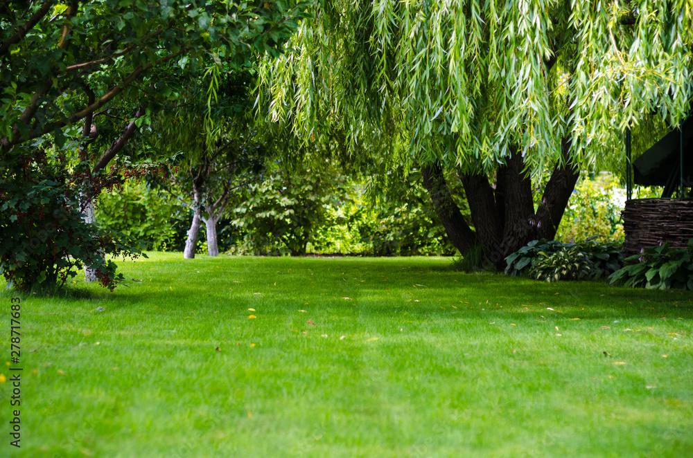 Fototapety, obrazy: green lawn back yard grass