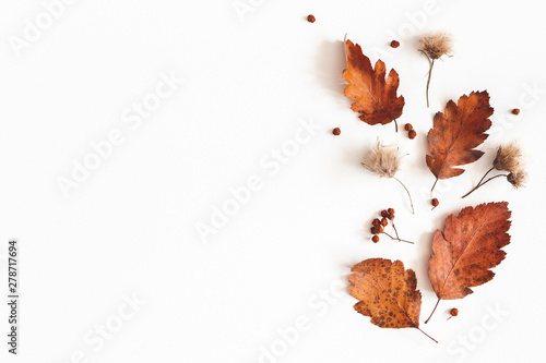 Autumn composition. Dried leaves, flowers, rowan berries on white background. Autumn, fall, thanksgiving day concept. Flat lay, top view, copy space - 278717694