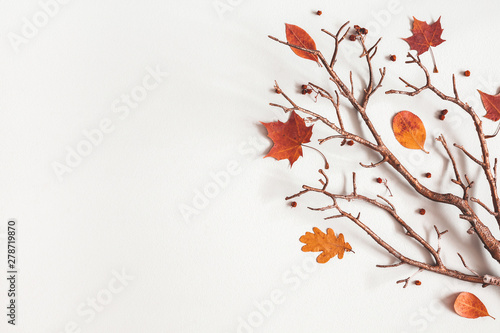 Obraz Autumn composition. Maple leaves, branch on gray background. Autumn, fall, thanksgiving day concept. Flat lay, top view, copy space - fototapety do salonu