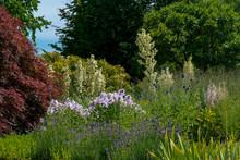 Scenic Summer Flower Bed Featu...