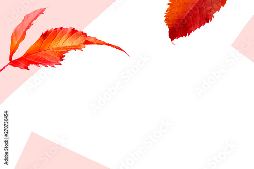 Autumn leaves background design with copy space