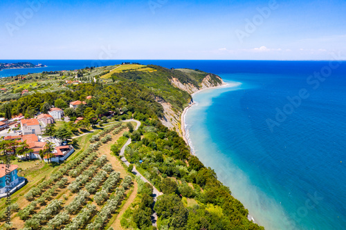 Fotografia  Aerial view of vineyard by the sea and seaside with viticulture
