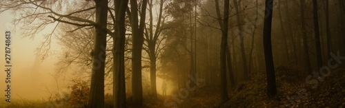 Dark creepy foggy beech forest Wallpaper Mural