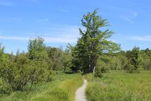 Jesup Path At Acadia National ...