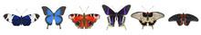 Set Of Butterflies. Vector Illustration. EPS 10