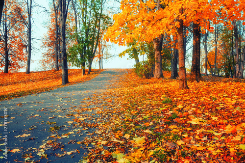 Foto op Plexiglas Herfst Autumn landscape - yellowed trees and fallen autumn leaves in city park alley in soft morning light, retro tones