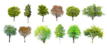 Isolated Of Tree Collection On...
