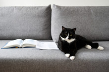 .Cat Lying On The Sofa Next To Books.