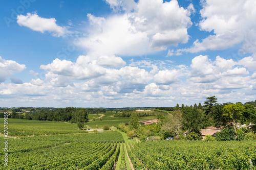 Photo Vineyards in France