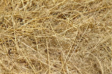 Dry Hay As An Abstract Background
