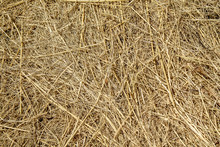 Dry Hay As An Abstract Backgro...