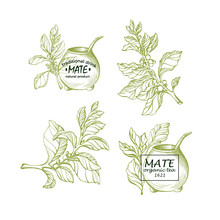 Yerba Mate. Natural Tea. Calabash Gourd. Set