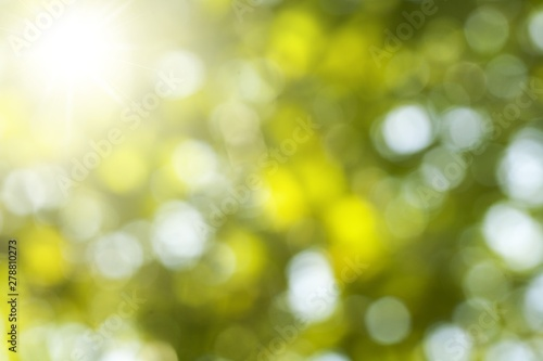 Sunlight. Canvas Print