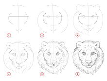 Creation Step By Step Pencil Drawing. Page Shows How To Learn Draw Sketch Of Imaginary Cute Tigers Head. School Textbook For Developing Artistic Skills. Hand-drawn Vector Image.