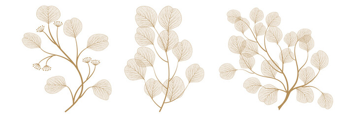 Set branches with leaves eucalyptus. Vector illustration. EPS 10.