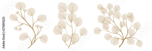 Fototapeta Set branches with leaves eucalyptus. Vector illustration. EPS 10. obraz
