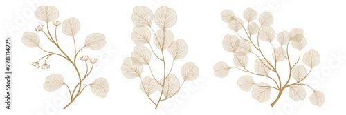 Obraz Set branches with leaves eucalyptus. Vector illustration. EPS 10. - fototapety do salonu