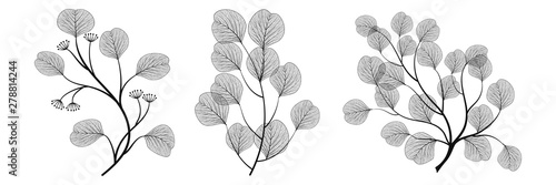 Obraz Set branches with leaves eucalyptus. Vector illustration. EPS 10. - fototapety do salonu