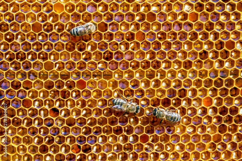 Fototapety, obrazy: Bees and honey