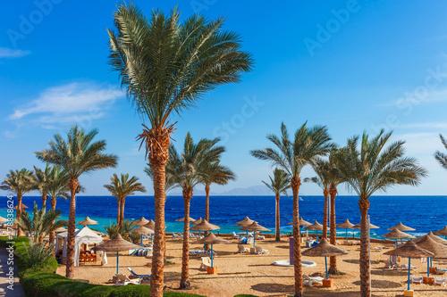 Foto auf AluDibond Dunkelbraun Sunny resort beach with palm tree at the coast shore of Red Sea in Sharm el Sheikh, Sinai, Egypt, Asia in summer hot. Bright sunny light
