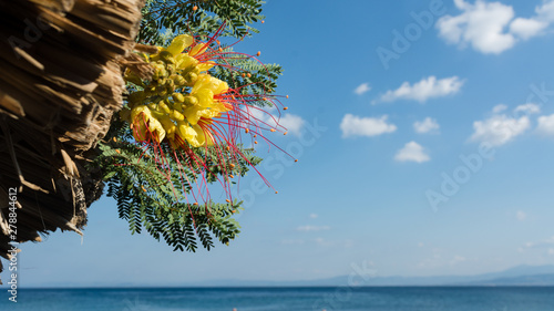 Yellow Mediterranean flowers