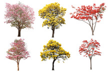 The Collection Set Of Isolated Yellow, Pink And Red Flower Tree In Spring And Summer Season For Design Purpose3