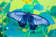Beautiful Butterfly Resting On A Leaf