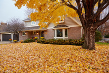 Fall Leaves Carpeting The Front Yard Of My House During Autumn In Minnesota, USA