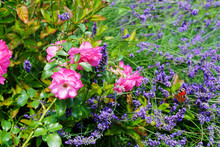 Various Flowers Growing In Garden