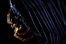 Big Predatory Spider Weaving C...