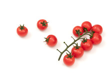 Tomatoes On Branch Isolated On White