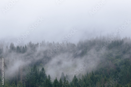 Foto auf Gartenposter Grau Foggy spruce forest at Carpathian mountains after summer rain. Misty landscape with fir forest in hipster style with copy space.