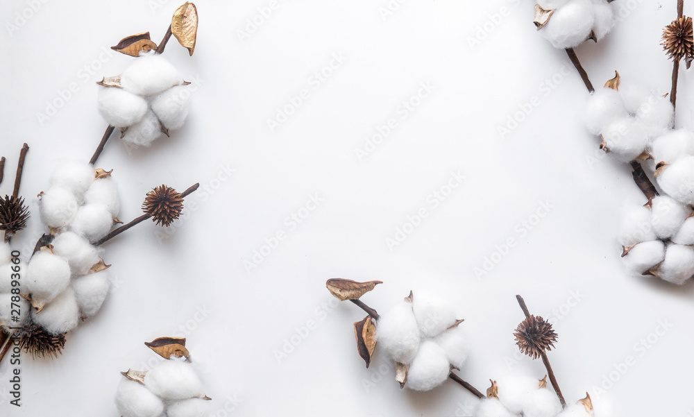 Fototapety, obrazy: branch of white cotton on a white background, minimalism, cover web.
