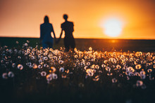 The Happy Couple On The Background Of The Sunset In Spring Dandelions Field