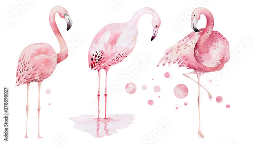 Naklejki Flamingi  naklejka-na-wymiar-hand-drawn-watercolor-tropical-birds-set-of-flamingo-exotic-rose-bird-illustrations-jungle-tree-brazil-trendy-art-perfect-for-fabric-design-aloha-collection